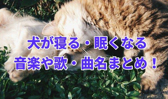 音楽 眠く なる 犬が寝る(眠くなる)歌【tiktok】曲名や歌詞は?原曲は誰の歌?